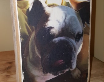 Pet photo image on wood