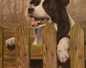 Border Collie Original Painting by award winning British artist JOHN SILVER. B.A. 20 x 16 inches