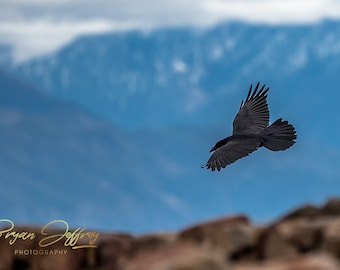 Red Rock Raven