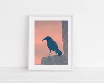 Digital Download, Digital Print, Original Photography, Wall Art, Home Decor, Printable, Blackbird, Tropical Bird, Pink Sky, Bird Photo