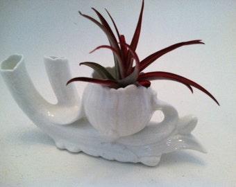 Rare White Fine Bone China Bud Vase Air Plant Holder Minimalist Boho Home Decor Refined  Porcelain Mid Century