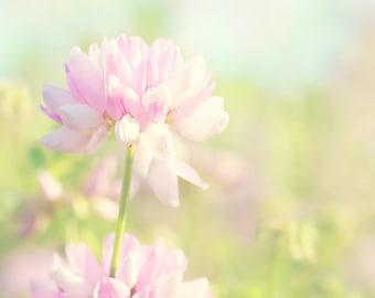 Crown Vetch Color Photo Print { pink, green, blue, sky, wild, flower, sunshine, sunlight, wall art, macro, nature & fine art photography }