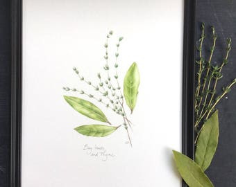 Bay leaves and Thyme - original drawing