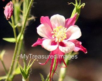 Beautiful small pink flower 11X14 fine art photograph.