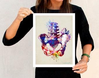 "Watercolor Pelvis, 11"" x 14"" Fine Art Print, Osteopathic Nurse Practitioner gift, Chiropractor art, Orthopedic Surgeon, Pelvis print,Anatomy"