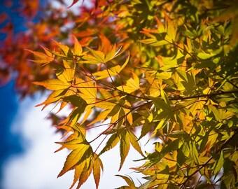 Westonbirt Autumn 1 - Fine Art Photography - Wall Décor - Nature Photography