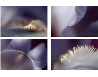 Iris Print Set, Four Abstract Photographs, Ultra Violet Purple Wall Art,  Macro Flower Photography, Meditation Art