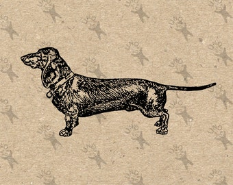Vintage image Dogs Breed Dachshund Instant Download Digital printable clipart graphic Burlap Fabric Transfer Iron On T-shirt  HQ 300dpi