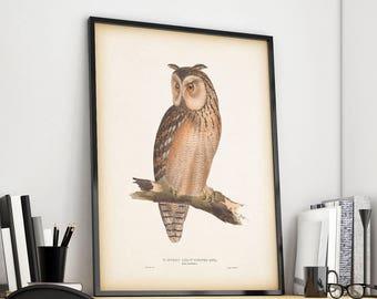 Vintage owl print, Owl illustration, Antique bird print, Instant download print, Bird wall art, Home wall decor, 8x10 print, 11x14 print