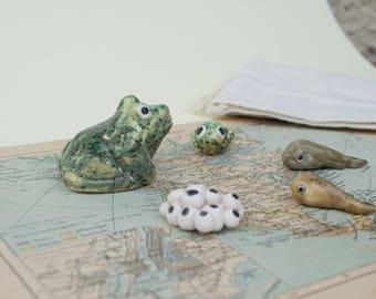 Frog Life Cycle -  Sensory Game