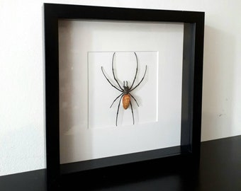 Real pinned nephila pilipes Spider taxidermy curiosity insect from Java