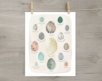 Egg Specimen Print, Bird Eggs Poster, Ornithology, Song Birds, robin, cardinal, mallard, etc.