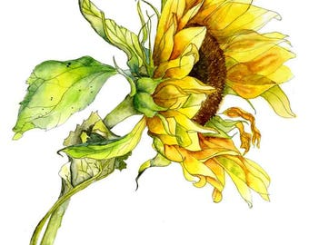 Limited Edition Archival Giclee print of an original watercolour depiction of a sunflower