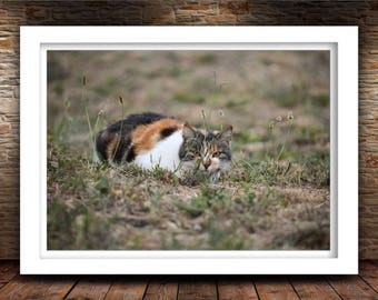 Spying Cat Photo Print, Nature Photography, Kitten Art, Home Decor, Fine Art Photography Print