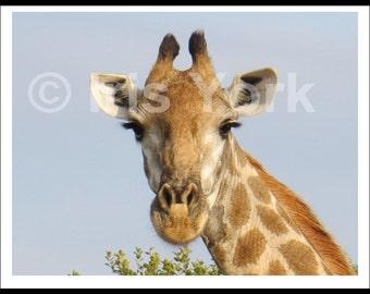 Close-up Giraffe Head Photograph, Wildlife, Sabi Sands Reserve, South Africa, Safari, Eyelashes, Animal Print, Nature,  Art, Gifts for Baby