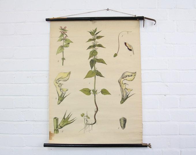 Canvas Backed German Botanical Wall Chart Circa 1930s