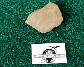 Faux Petroglyphs - Prepared on Sandstone