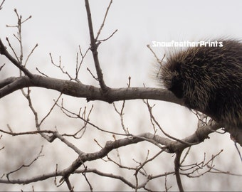 Porcupine in Tree - Ships Free