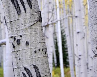 Aspen tree wall art, fall decor, Colorado art, aspen trees fall, bear claw marks print, rustic wall decor, aspen trees Colorado, fall art