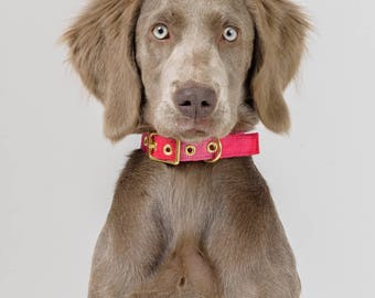 Guatemalteekse Ikat + Brass hond kraag roze / / stof Dog Collar Buckle kraag - Australië - gemaakt in Melbourne