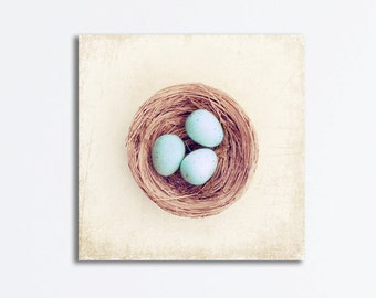 Nursery Canvas Wrap - robins nest baby bird eggs nursery blue beige cream country print light brown, 20x20, 16x16 print photo - Gallery Wrap