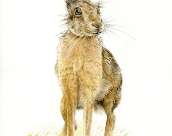 Hare Picture - A4 Limited Edition Print