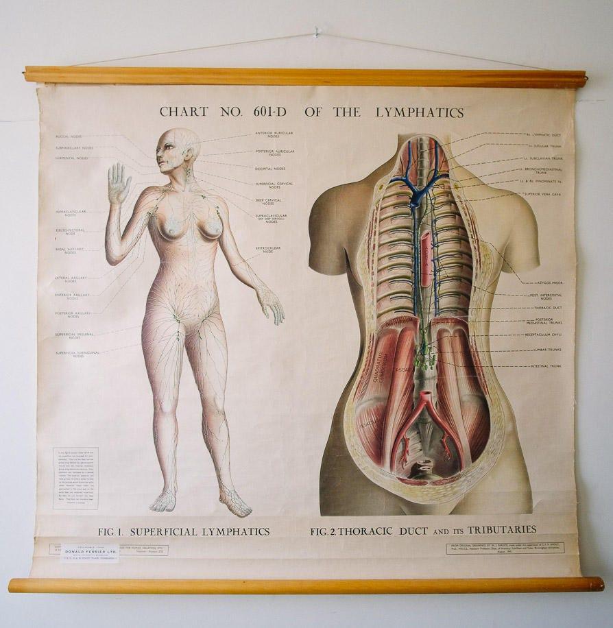 Original ANATOMICAL Medical Vintage British Educational School Wall ...