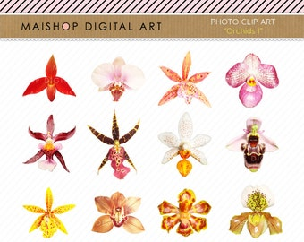 PNG Flowers Clip Art + Digital Collage Sheet Colorful Orchids for Collages, Card Making, Graphic Design, Invitations...