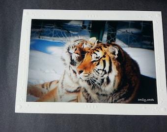 Card, greeting card, animal card card handmade, photo card, Tiger, Tiger love