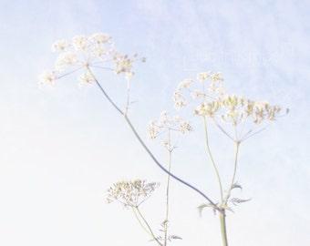 Wildflower Print - Queen Anne's Lace Fine Art Photograph - Summer Flowers - Pale Blue Decor - Botanical Art - 8x10