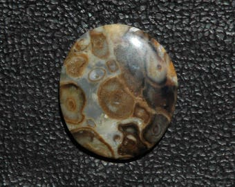 Fascinating Petrified Palm Cabochon C49