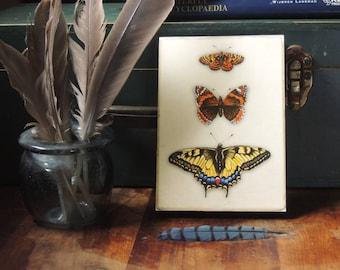 Original art reproduction print Butterfly trio natural history art on wood block 5x7 rustic home decor gardening art