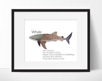 Whale Shark Facts - Shark Decor - Nursery Print - Classroom Art - Whale Shark Print - Shark Prints - DIY Decor - Instant Download 8x10