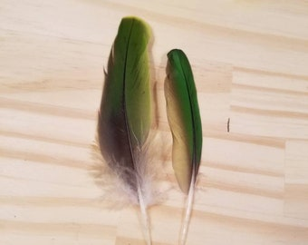 Green Macaw Feathers Cruelty Free Humane Naturally Molted Real Feathers #c88