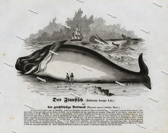 Authentic 1842 Natural History Print of Fish  - Large print-black and white