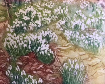 Snowdrop wood, early Spring