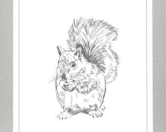 Squirrel - Pencil Sketch - Print