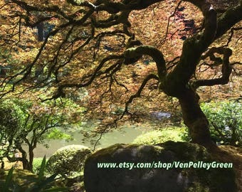 Japanese Garden - Japanese Maple Tree - Photography- Print