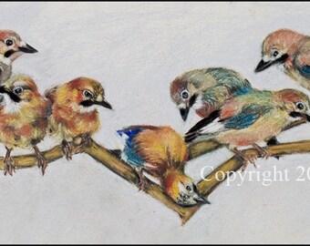 Eurasian Jays in a Row 4 X 9 1/4 inch blank long card