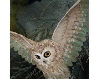 Saw Whet Owl 2 8x8 signed fine art print.  Bird lover gift, nature.