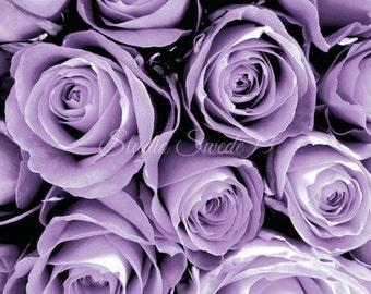 "Rose Art, Purple Rose Print, Cottage Chic Garden Photography, Purple Flower Photo, Romantic Lavender Modern Botanical Print- ""Lavender Love"""