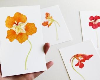 Nasturtium Flowers Watercolor Botanical Print Set / Orange / Fine Art / Gifts Under 50 / 4x6 / Miniature / Realistic / Contemporary / Floral