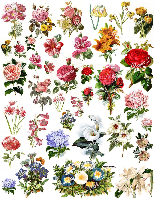 Vintage Flower Sheets Heartpulsar