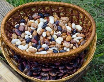 Bulgarian runner beans, Smilyan Beans - [Phaseolus coccineus]
