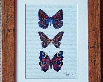 Butterfly Print Butterfly Picture Butterfly Artwork - Original Butterfly Design. A trio of butterflies on a subtle script ground