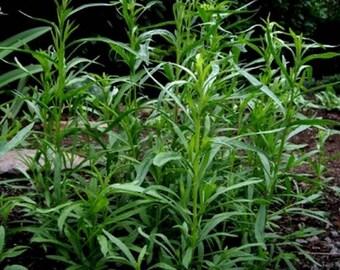 Tarragon- Artemisia Dracunculus- 200 seeds