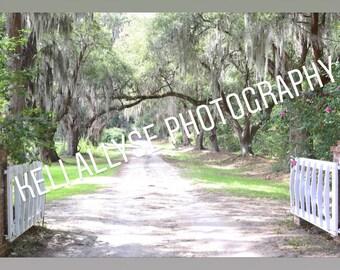 Digital copy of Keli Allyse Photography Spanish Moss Dirt Road image
