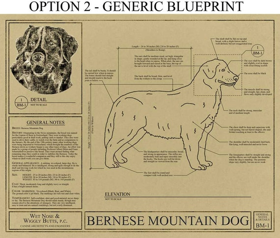 Personalized bernese mountain dog blueprint bernese mountain personalized bernese mountain dog blueprint bernese mountain dog art bernese mountain dog wall art bernese mountain dog gift malvernweather Gallery