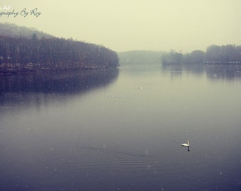 Swan lake in early snow, muted winter scene original photography - Somers,  New York, Upstate