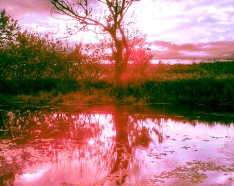 Electric - Surreal color infrared photograph. Fine art print of a surreal winter sunset in the Everglades